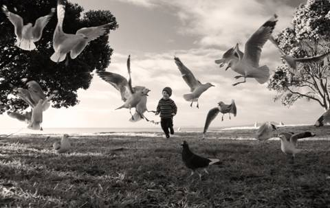 Angela Taft; Chasing The Birds