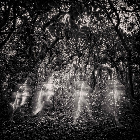 Anil Dumasia; Chasing Shadows winner