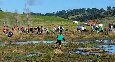 Colin Lunt; Tree Planting Long Bay