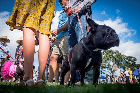 Jeff Harris Devonport Dog Day
