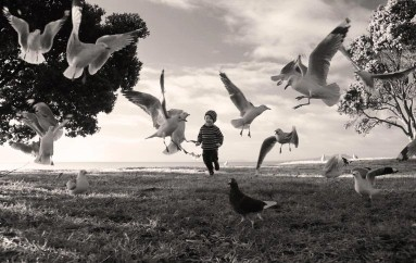 Angela Taft;Chasing The Birds
