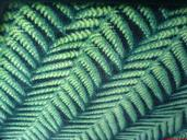 Medha Ghatikesh;Ferns On Bus Seat;The pattern on a seat of a new Metrolink bus. Resembles real ferns doesn't it?!