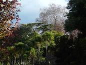 Mathieu de Chalain; The Beauty of Waiata Reserve; A winter explosion of colours in an unassuming park