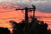 deb moncur; beauty though powerlines; taken from my deck in herald island